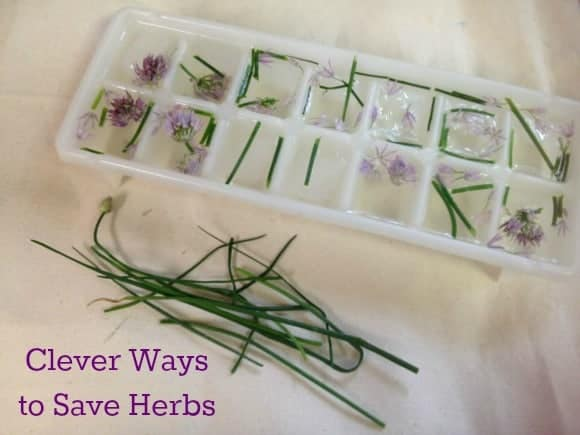clever-ways-to-save-herbs-for-later