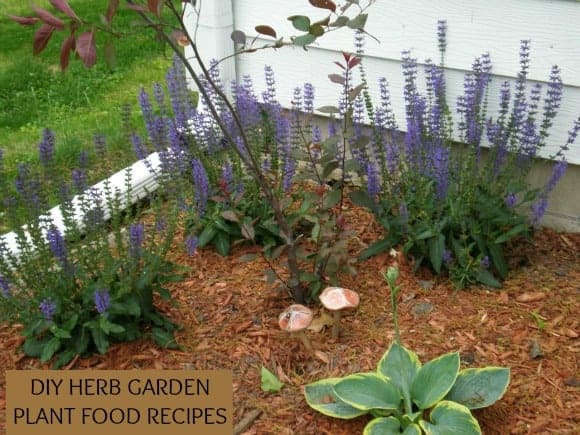 5-recipes-to-feed-your-herb-garden