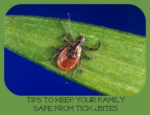 summer-safety-tips-tick-bites