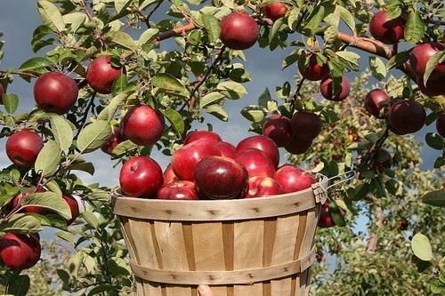 amazing-massachusetts-food-facts