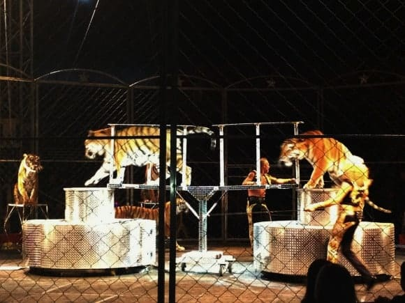 shrine-circus-family-fun-night