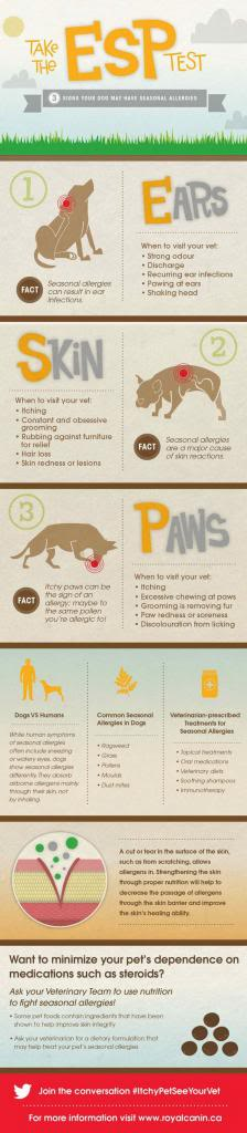 itchy-pet-see-your-vet