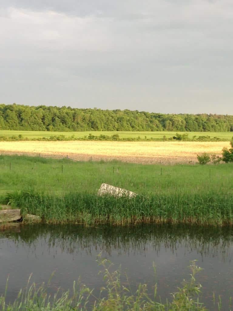 burnbrae-farm-tour