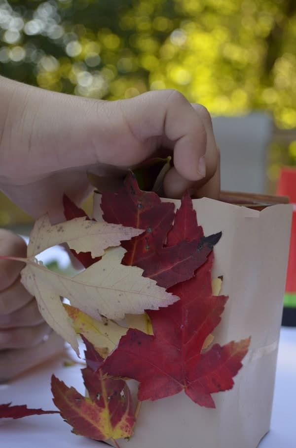 how-to-preserve-the-beauty-of-fall-leaves